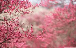 Cute Blossom Wallpaper 10141