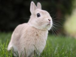 Cute bunny Wallpaper in 1600x1200 Normal