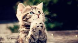 Desktop Hd Photos Of Cute Cats High Definition Wallpapers for Free