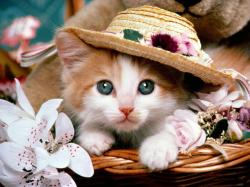 Cats In Basket Wallpaper CUTE CAT INSIDE BASKETBALL