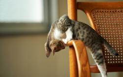 Cute cat chair