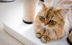 Cute little cat in the house wallpaper 2560x1600.