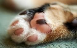Cute cat paw Wallpapers Pictures Photos Images. «