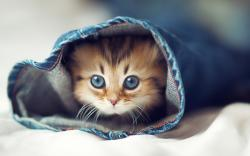 Cute Cat Background Wide Wallpaper Ehiyo Xpx On