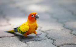 Cute colorful parrot