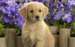 beautiful cute dog high definition wallpaper
