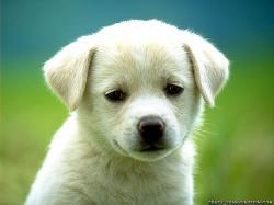 D O G S Too cute :)
