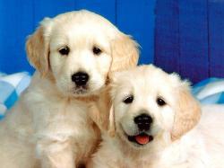 Dogs Cute Dog Wallpaper