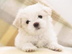 Hd Cute. : Hd Cute Dog wallpapers ...