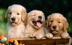 Cute Dog Wallpapers5