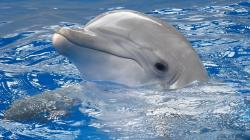 ... of top 10 Cute Dolphin Wallpapers. These free downloadable wallpapers are HD and available varying range of sizes and resolutions.