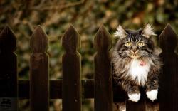 Cute Fence Wallpaper 31686 2560x1600 px