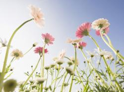 Cute Flowers Images 26 HD Wallpapers