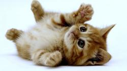 Cute Kittens 1 Wallpaper HD
