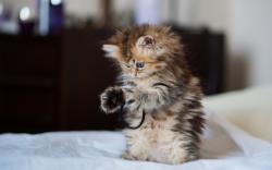 Cute kitty playing