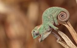 Cute Chameleon Portrait is free HD wallpaper. This wallpaper was upload at July 1, 2015 upload by photographyw in Animal.