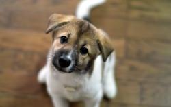 Cute Look Puppy
