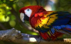 Cute macaw parrot