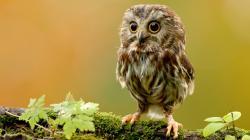 Cute Owl Wallpaper