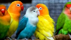 hd different pictures of birds