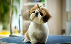 1604 Views 573 Download Cute Pet Dog Wallpaper