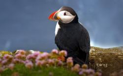 Cute Seabird Atlantic Puffin