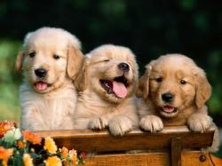 Cute and Adorable Puppy Image