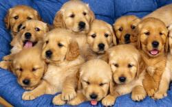 Puppies Cute Puppies :)