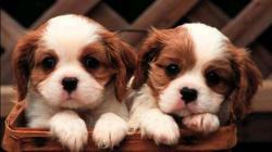 Homepage Dog Puppy