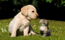 Cute Puppy Kitten Wallpapers Pictures Photos Images. «