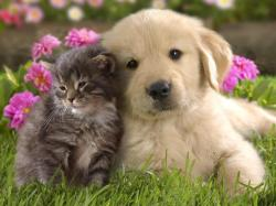 Cute Pictures of Puppies and Kittens Together