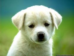 Dogs Baby U Cute Puppy Dog S Photo Desktop Wallpaper