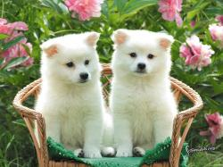 Cute Puppies Wallpaper Images