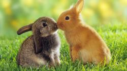 Cute rabbit 16096