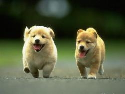 Cute Puppies Running Wallpaper