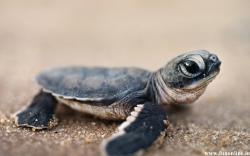 Cute Green Sea Turtle HD Wallpaper