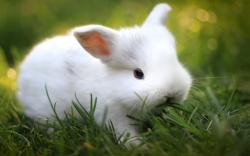 Cute white bunny