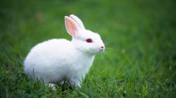 Cute White Rabbits Wallpapers 1