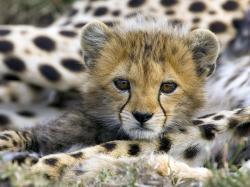 cute wild animal 184606