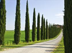 Cypress trees Wallpaper in 1600x1200 Normal