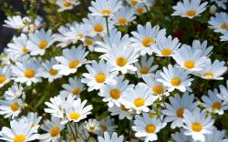 2560x1600 Wallpaper daisies, white, meadow, summer, mood