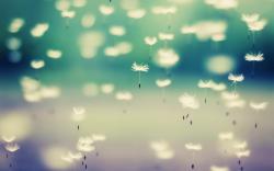 Dandelion Flying Seeds HD Wallpaper