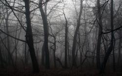 ... Dark Forest Wallpaper ...