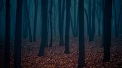 Wallpaper Dark Forest Wallpaper: Wallpapers for Gt Dark Forest Wallpaper 1920x1080px