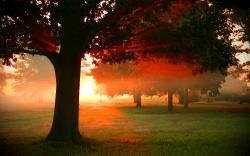 Gorgeous Dawn Wallpaper