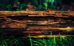 Decayed tree trunk