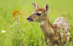For example, the process of deer culling will obviously reduce the immediate number of deer in a specific area on a short-term basis, but with less ...