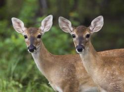 The deer photographs above are: young fallow deer (by UK photographer Josh Smythe); a deer buck at Dunham Massey Deer Park, in north-west England, ...