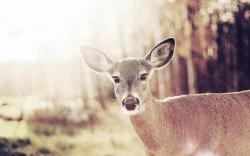 Bambi Deer Look