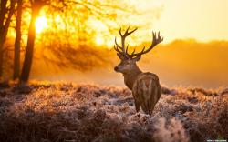 Deer Sunset Time HD wallpaper 2560x1600 ...